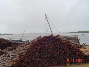 Mangroves poles