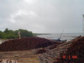 Mangrove Poles Mokowe