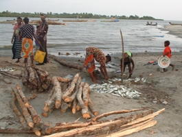Wood supply depleting mangroves